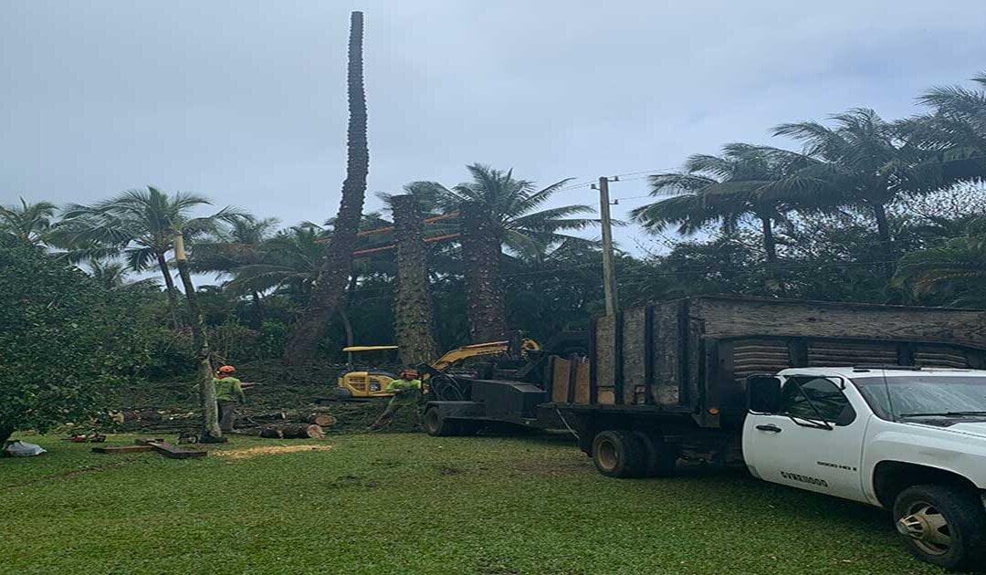 Tree Trimming Kilauea Kauai
