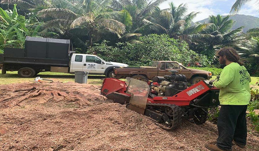 Stump Removal Kauai