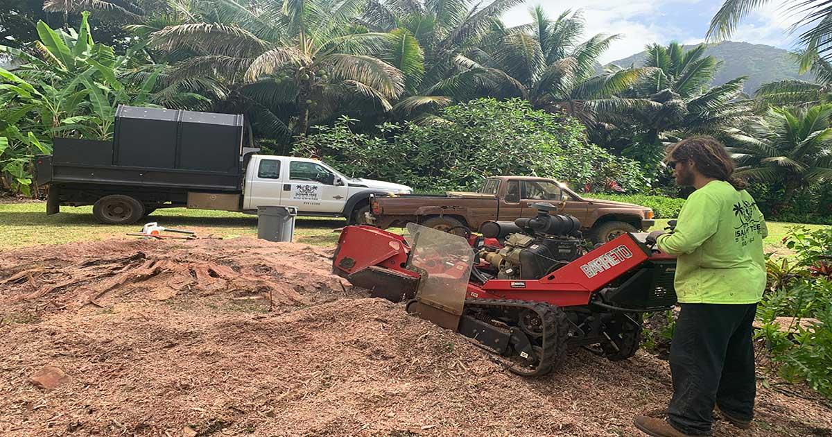 Stump Removal Kauai - Isaiah's Tree Service