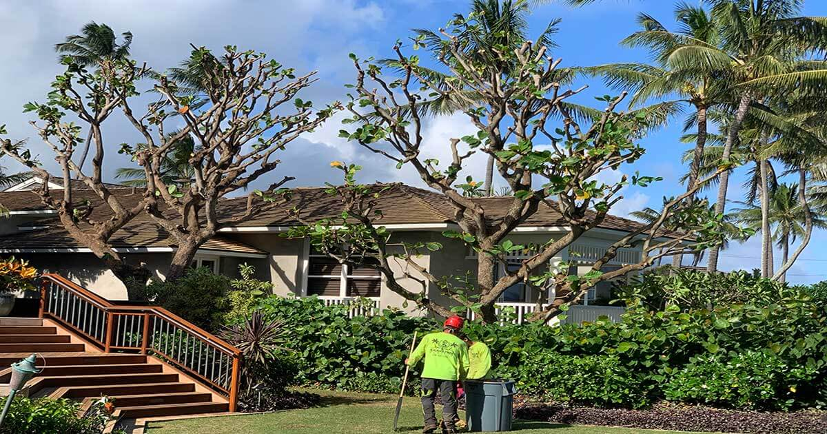 #1 Tree Care Service on Kauai