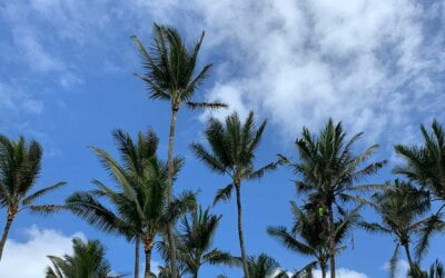 What Not to do With Palm Tree Fronds