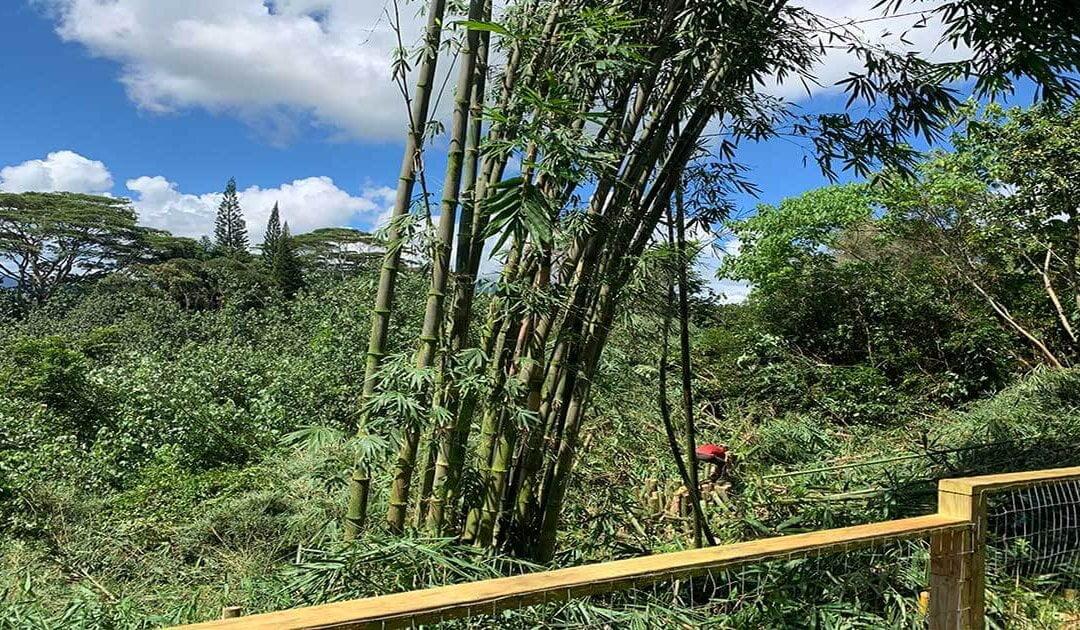 Tree Trimming Princeville Kauai