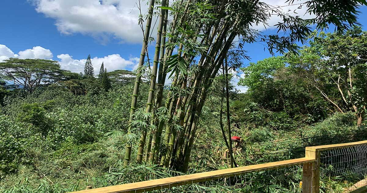 Isaiah's Tree Service In Princeville