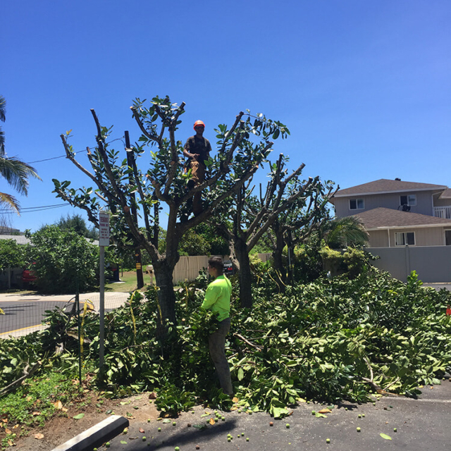 Isaiah's Tree Service - Keeping Your Property Beautiful