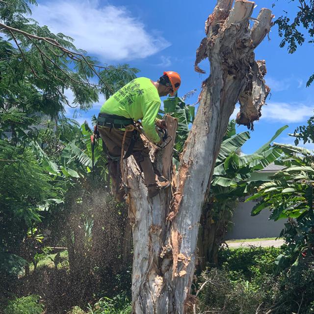 Isaiah's Tree Service Trims & Removes Kauai's Trees