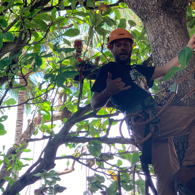 Isaiah's Tree Service - Trimming Trees is What We Do
