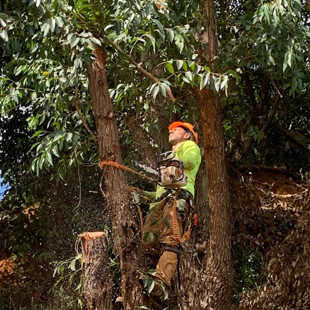 Isaiah's Tree Service - Big or Small We Trim Trees