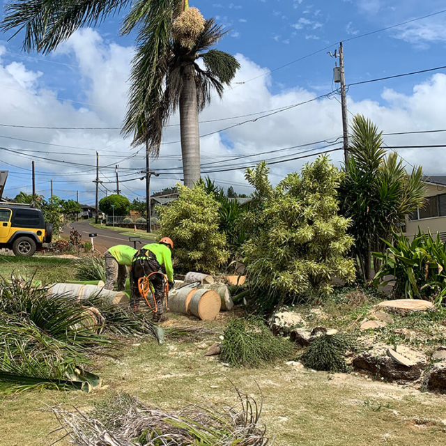 Isaiah's Tree Service - Total Palm Tree Removal