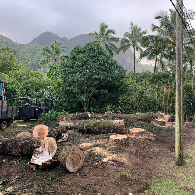 Isaiah's Tree Service - We Handle Total Tree Removal