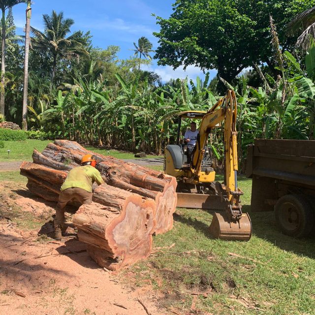 Isaiah's Tree Service - Kauai's #1 Tree Removal Company