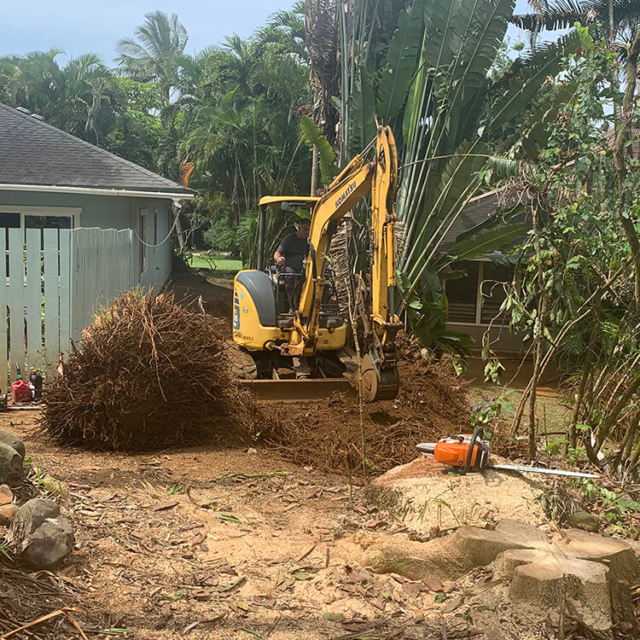 Isaiah's Tree Service - Removing Trees & Stumps