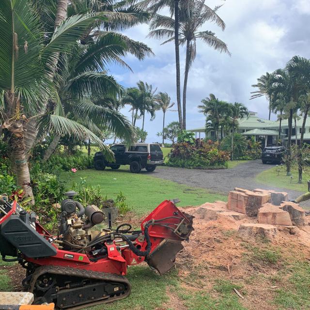 Isaiah's Tree Service - We Remove Stumps