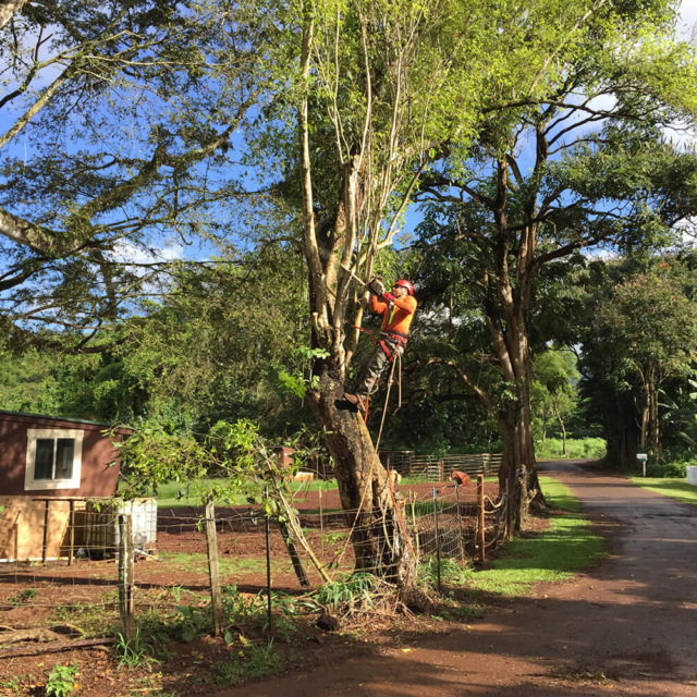 Isaiah's Tree Service - Trimming Trees Safely