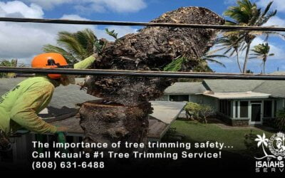 4 Reasons Why Practicing Tree Trimming Safety Will Help Protect Your Landscape