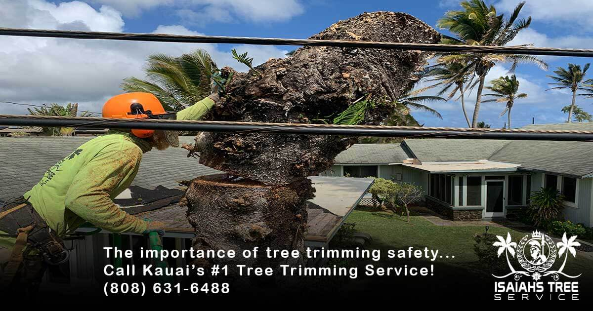 Tree Trimming Safety Our #1 Priority At Isaiah's Tree Service
