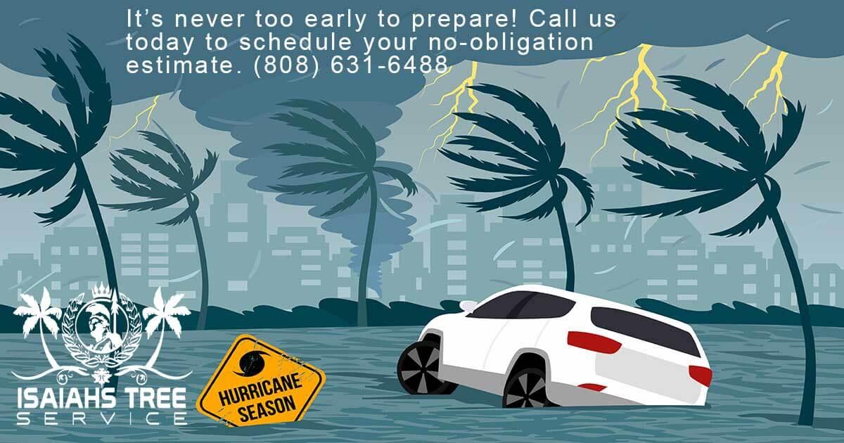 Hurricane Tree Preparedness - Isaiah's Tree Service