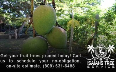 3 Facts You Need To Know About Pruning Fruit Trees