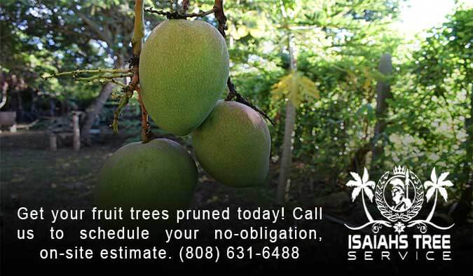 Fruit Tree Pruning - Isaiah's Tree Service