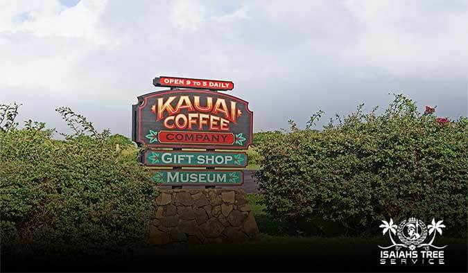 History Behind Hawaii's Popular Kauai Coffee