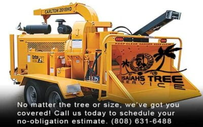 Learn Your Tree Trimming Tools: The Woodchipper